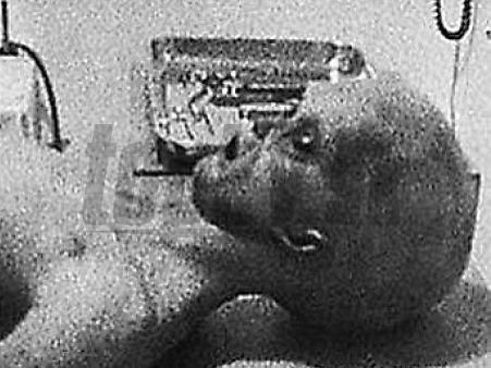 Fotografia z roku 1947