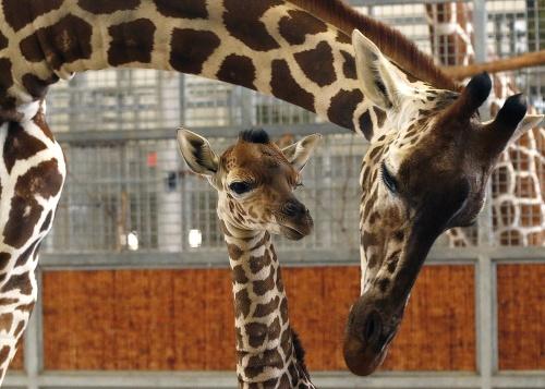 Zoo v Dallase má