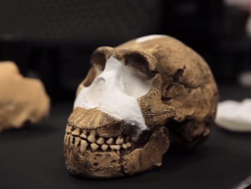 Lebka človeka Homo Naledi