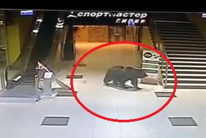 Medveď v nákupnom centre