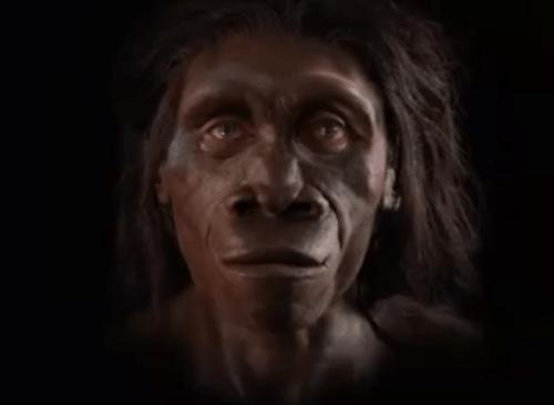 Šesť miliónov rokov evolúcie