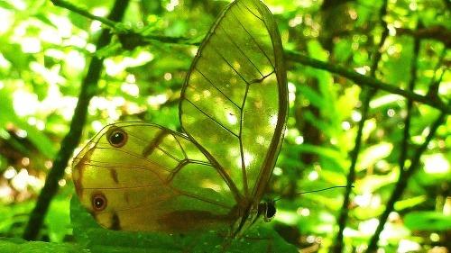 V ekvádorskom pralese žije