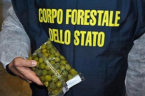 olivy boli na zlepšenie
