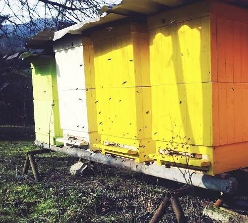 Slovenská včelárka prezradila, ako