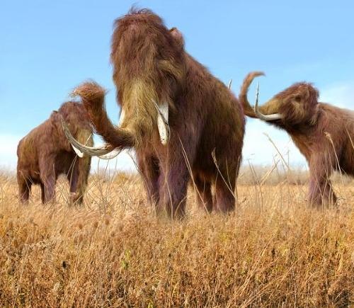 Mamuty vyhynuli kvôli vlastnému