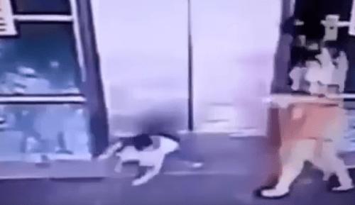 VIDEO sekúnd hrôzy: Duchaprítomnosť