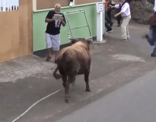 Býk otočil svoj hnev
