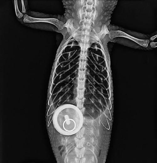 Najbizarnejšie röntgenové FOTO: Toto