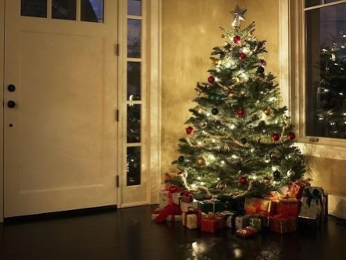 4b22e374387a8 Vianoce sú za dverami: 10 dôvodov, prečo si kúpiť živý stromček ...