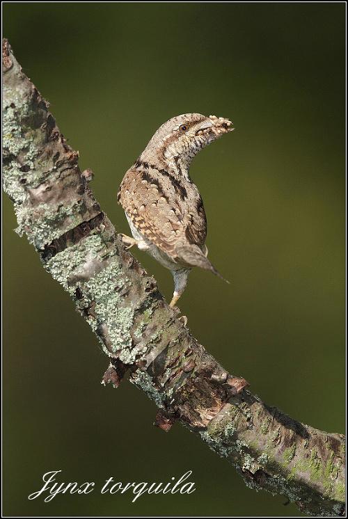 Fascinujúce fotografie nášho vtáctva