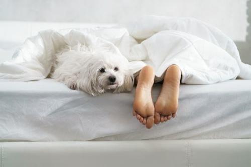 Spávate so svojím psom