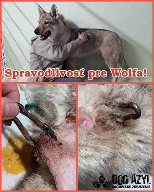 Ďalší týraný pes v