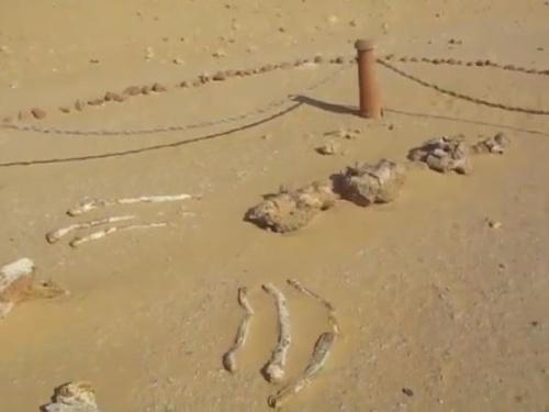 Vedci objavili zvyšky prehistorického
