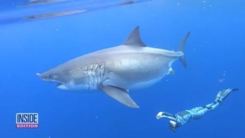 VIDEO Potápačom sa pri