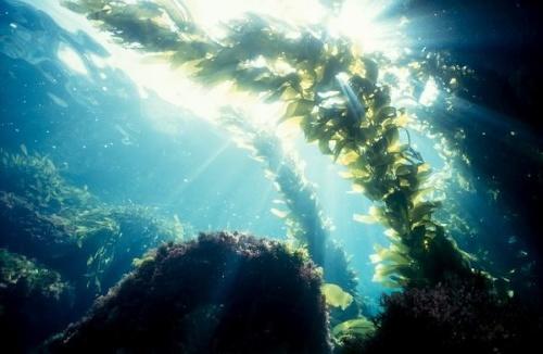Polovica svetových oceánov sa