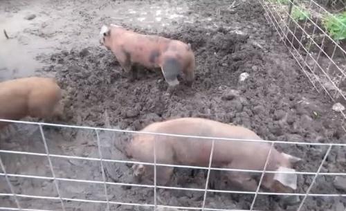 Horor na farme: Majiteľ