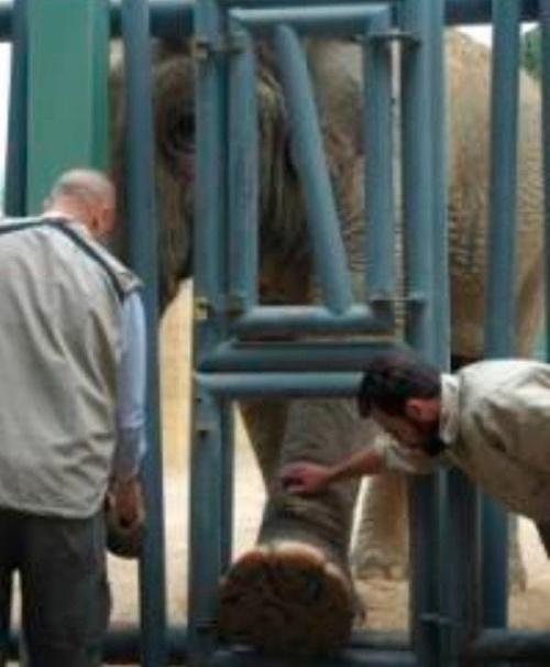 FOTO Najsmutnejší slon na