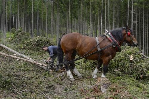 Novým šéfom Štátnych lesov
