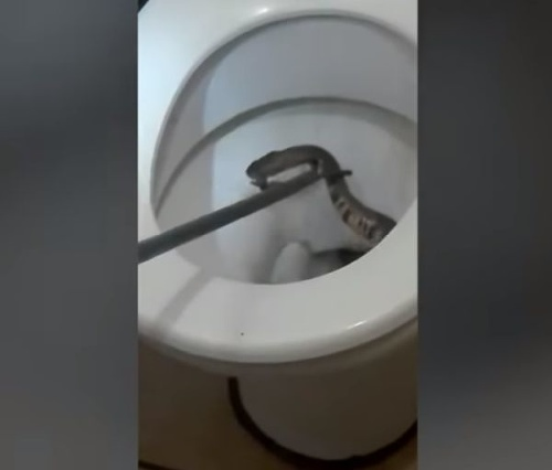 VIDEO Matka zdvihla dcérku