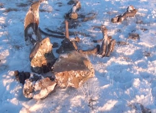 Pozostatky mamuta v Jakutsku