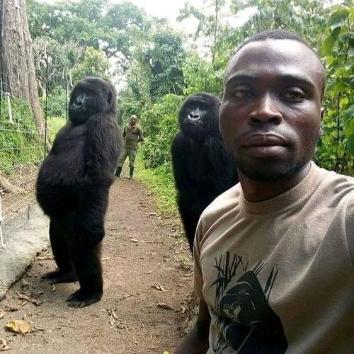 Gorily pózovali na selfie