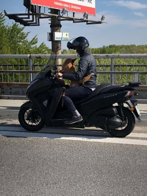 Pes na motorke.