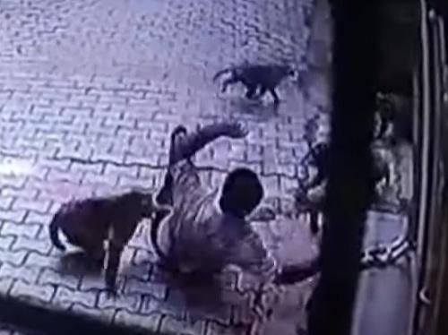 Muža napadli agresívne opice.
