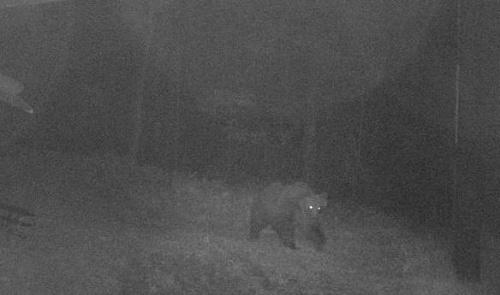 FOTO Úrady naháňajú medveďa,
