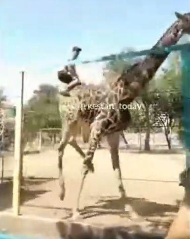 Opilec v zoo dostal