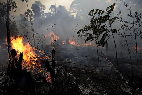 Amazonský dažďový prales postihol