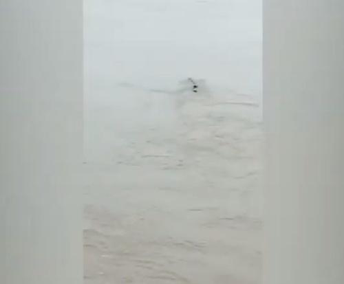 VIDEO Neďaleko priehrady plávalo
