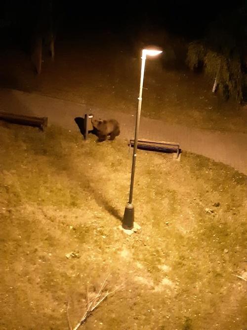 Medvede v Starom Smokovci.