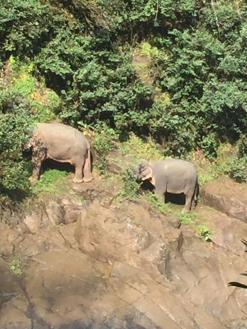 Rodina nadovšetko: VIDEO Slony