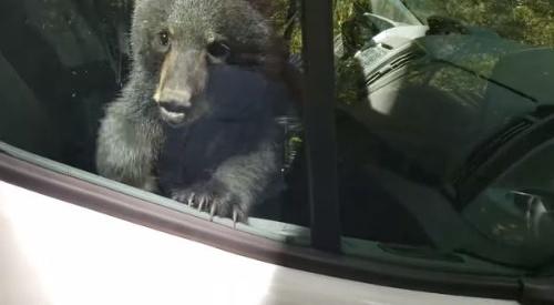 VIDEO Vodičovi do dodávky