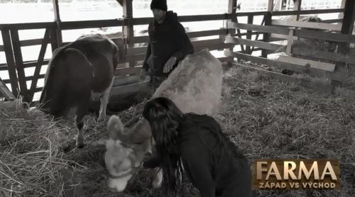 Mladú farmárku napadla krava: