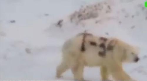 VIDEO Niekto posprejoval ľadového