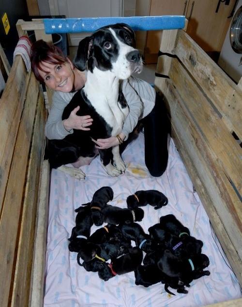 FOTO Sučka porodila prirodzene
