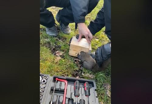 Vďaka hasičom sa veverička