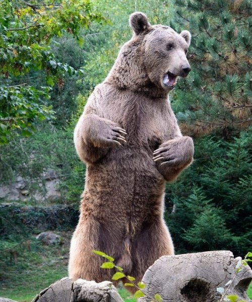 Medvede napáda neznáma choroba: