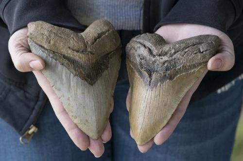 Vedci spočítali dĺžku prehistorického