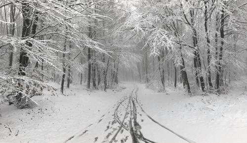 Situácia v lese nad