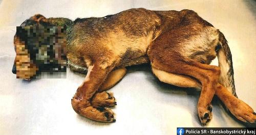 Na smrť utýraný pes