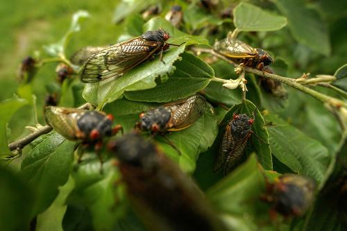 Máte strach z hmyzu?