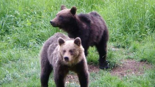 Medveď mal zaútočiť na