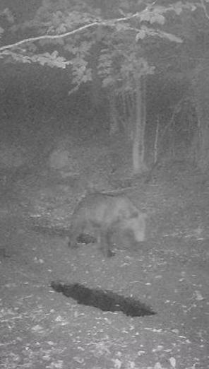 Ďalší medveď na obzore: