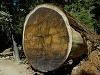 Národný park Sequoia, USA