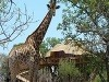 Pezulu Treehouse Game Lodge,