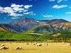 Hory, ovce… krajinka ako