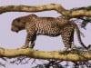 NA CESTÁCH Serengeti