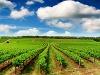Raj pre milovníkov vína: